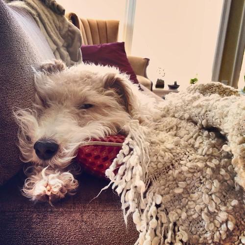 Snoozy pup