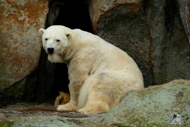 Berliner Zoo 25.01.2015  26