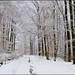 Une forêt enneigé....j'adore.... by Excalibur67