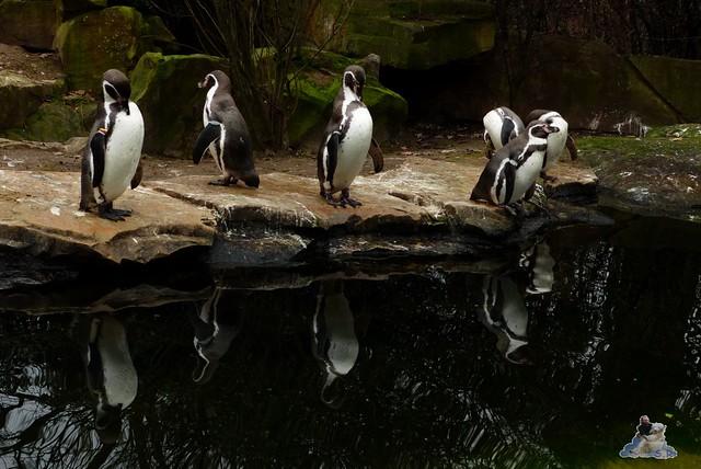 Berliner Zoo 25.01.2015  56
