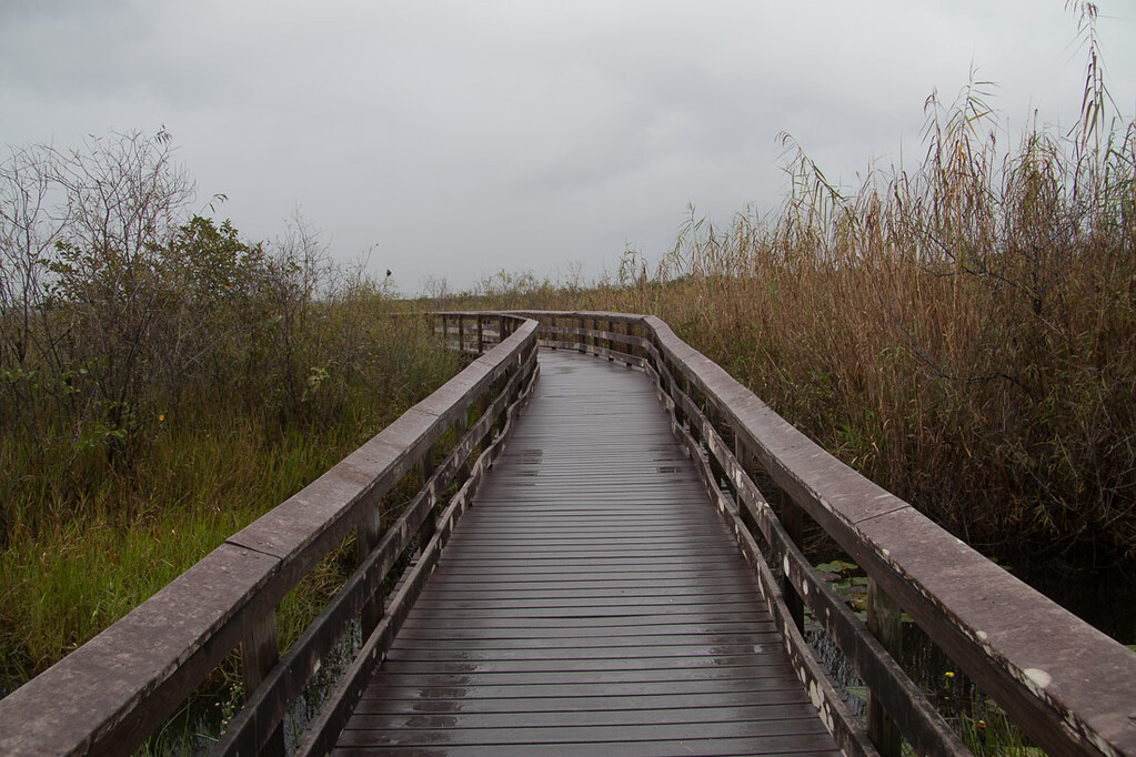 Along the Anhinga Trail