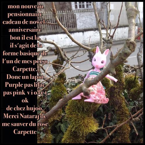 [ minipin et cojoo hujoo] Carpette et machine 16386408859_d200479f60