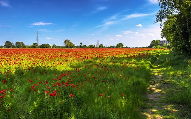 Milan in red 2