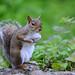 scoiattolando by gianmarco giudici