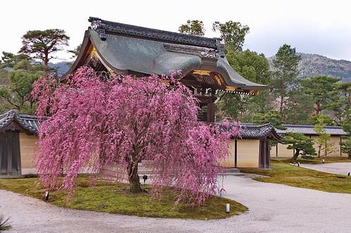 【写真】2013 桜 : 大覚寺/2020-09-15/IMGP9411