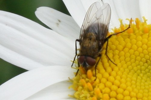 pollinator 082
