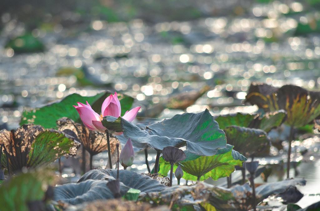 Payah Indah Wetlands 巴雅英达湿地公园