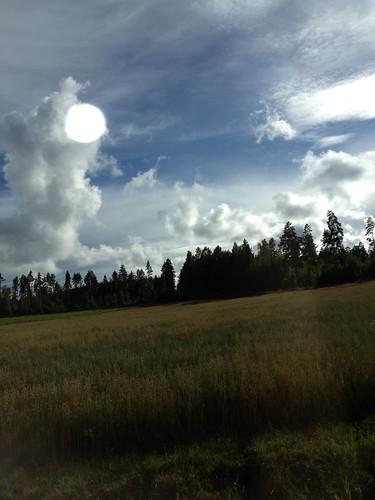 trees forrest peaceful iphone järnboås