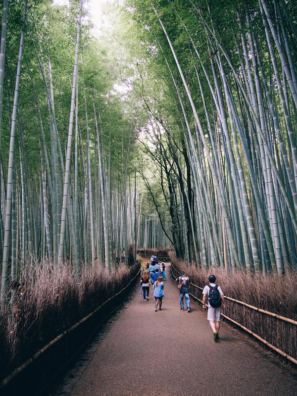 竹林之道 京都單車旅遊攻略 - 日篇 京都單車旅遊攻略 – 日篇 10112336654 bb2a324191 c