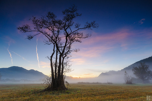 morning autumn trees color fall reed nature beautiful fog sunrise landscape outside outdoors austria landscapes quiet natural outdoor country peaceful calm daytime pure idyllic placid peacefulness calmness quietness fogg vorarlberg frastanz frastanzerried