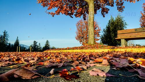 november autumn canada landscape waterfront britishcolumbia portalberni hwy4 clutesihavenmarina tamronsp2470mmf28divcusd quotvancouverislandquot