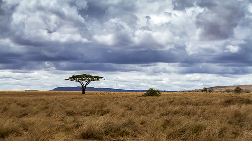 nature tanzania kenya savannah plains migration serengeti grassland mammals