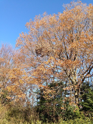 落葉の進む木々