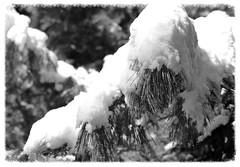 Black & White 2014-17