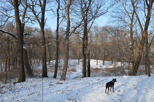 Snow day in Pankow Volkspark Schönholzer Heide Bailey ready to go