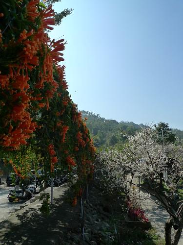 20140111-新社梅林親水岸 (100)