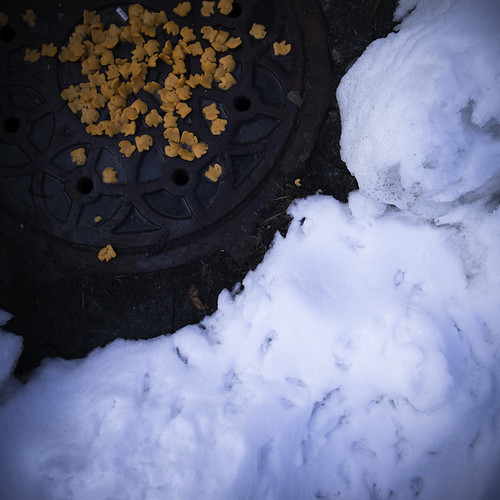 Petals, Snow on a Manhole Cover, Inwood, NYC