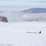 Mushers arrive in and depart from Dawson City, Yukon. Credit : Yukon Quest 2015 - Julien Schroder