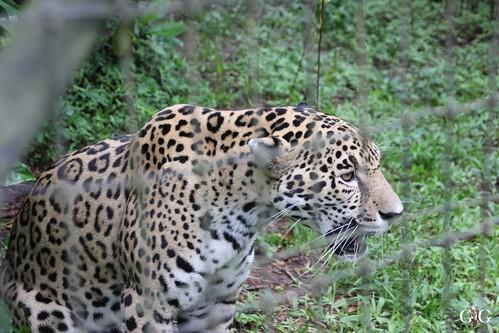 Zoo Karibikinsel Belize 19.11.2014 40