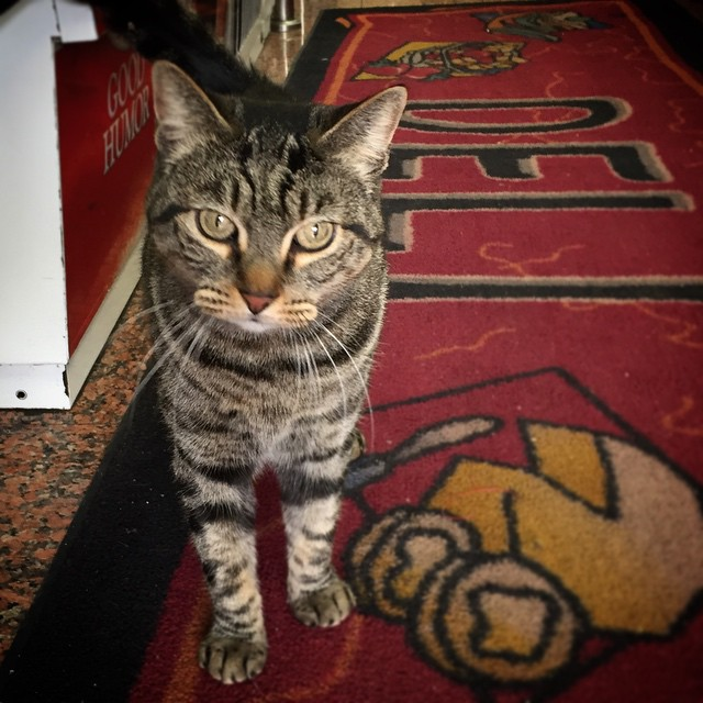 Indoor Cat Dry Cat Food Iama