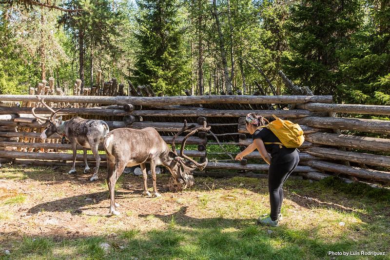 Sami Center Laponia Sueca-17