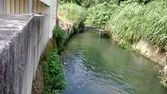 台灣白魚的食水嵙溪棲地河床遭水泥化(圖片攝影:羅聿)
