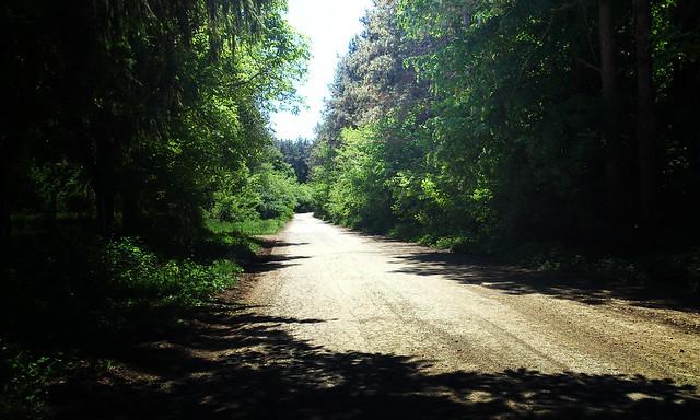 Hasan Yuzeir - Path in the woods