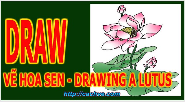 Cách vẽ hoa sen - How to Draw a Lotus Flower