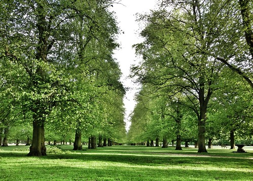 With a #view like this, who needs a #gym? #BushyPark #teddingtongate #teddington #kingston #richmond #twickenham #hamptoncourt #london #greatbritain #uk #trees #avenue