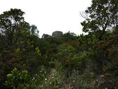 La sente de montée vers la Punta Sant'Andria