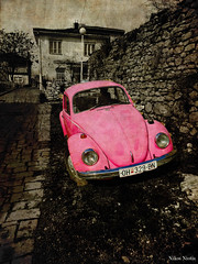 The Pink Beetle