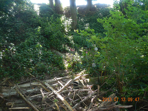 Ivy slope: Before