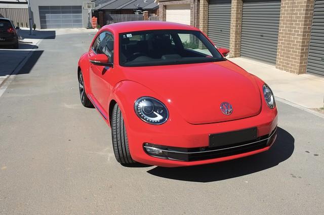 Beetle36
