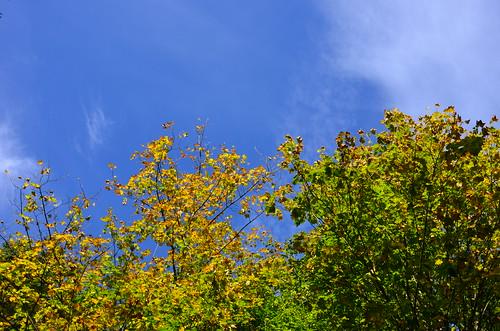 Blauer Himmel über Herbstlaub