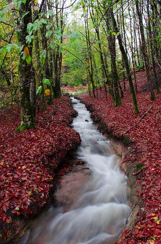 autumn orange france forest automne season rouge interesting woods colours seasons couleurs explore foret bois saisons correze limousin 4seasons saison deepforest 4saisons bassapower