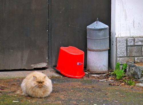 Clermont, Landes: le chat monte la garde.
