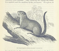 """British Library digitised image from page 553 of """"Explorations and adventures in Equatorial Africa; with accounts of the manners and customs of the people and of the chace of the gorilla, crocodile, leopard, elephant, hippopotamus and other animals. (Seco"""