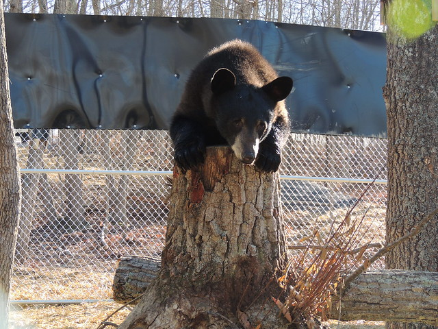 Black Bear Complex Moving Day II