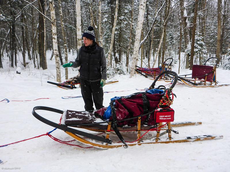dogsled sleigh