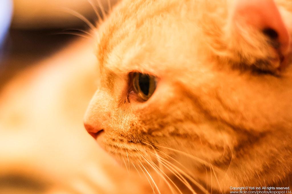 元氣貓主題餐廳 IMG_6090