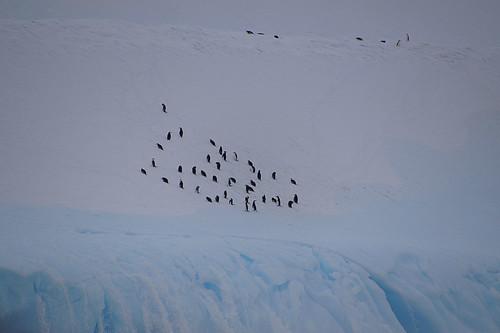 100 IJsberg met Pinguins