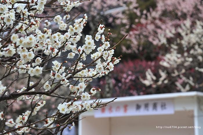 20140301_Fukuoka_0829 F