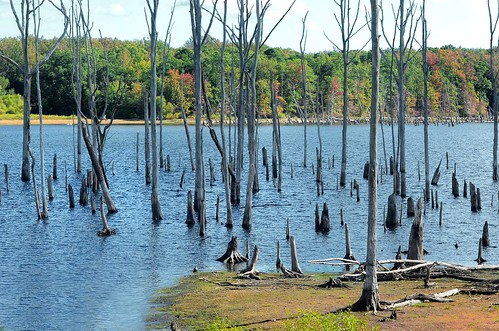 tree nature water landscape newjersey scenery nj reservoir swamp wetlands jersey bog wetland howell manasquanreservoir