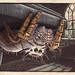 Phidippus mystaceus - under a table by Thomas Shahan 2