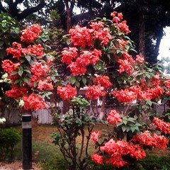 #natureofthebeauty #nice #flowers #flower #trees #tree #green #awesome #colors #instabd #instacomilla #instacity #instabangladesh #instaphoto #instamasud #followme #followyou #followback #followyouback #like #ourhistory #comilla #madeinbangladesh #banglad