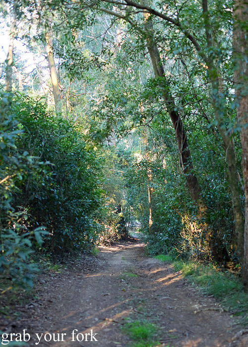 Walking trail in Bundanoon