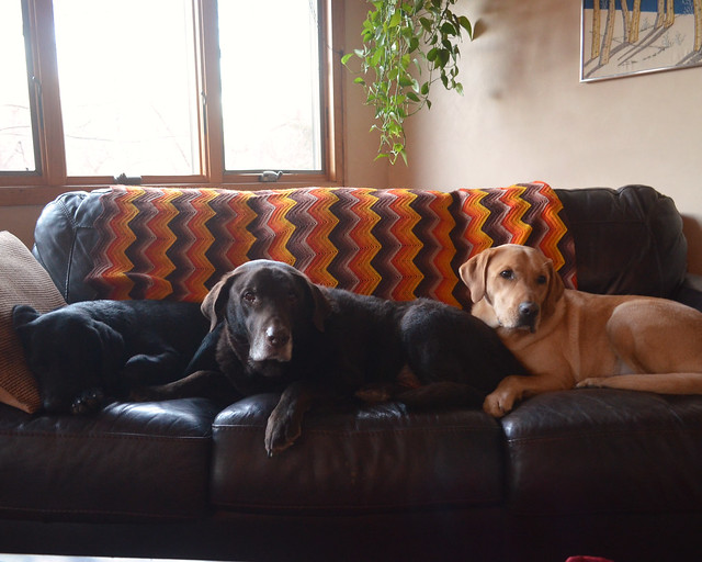 all 3 on the couch