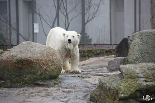 Sonntags Besuch im Zoo Berlin 25.01.2015 8