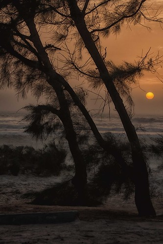 ocean africa trees sunset sea sky sun beach saint alberi louis tramonto mare atmosphere atlantic cielo poesia senegal antonio sole paesaggi atmosfera spiaggia oceano atlantico sbirciando mat56 romei