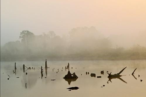 mist weather birds animals silhouette fog sunrise reflections thailand stork chiangrai wiangkaen